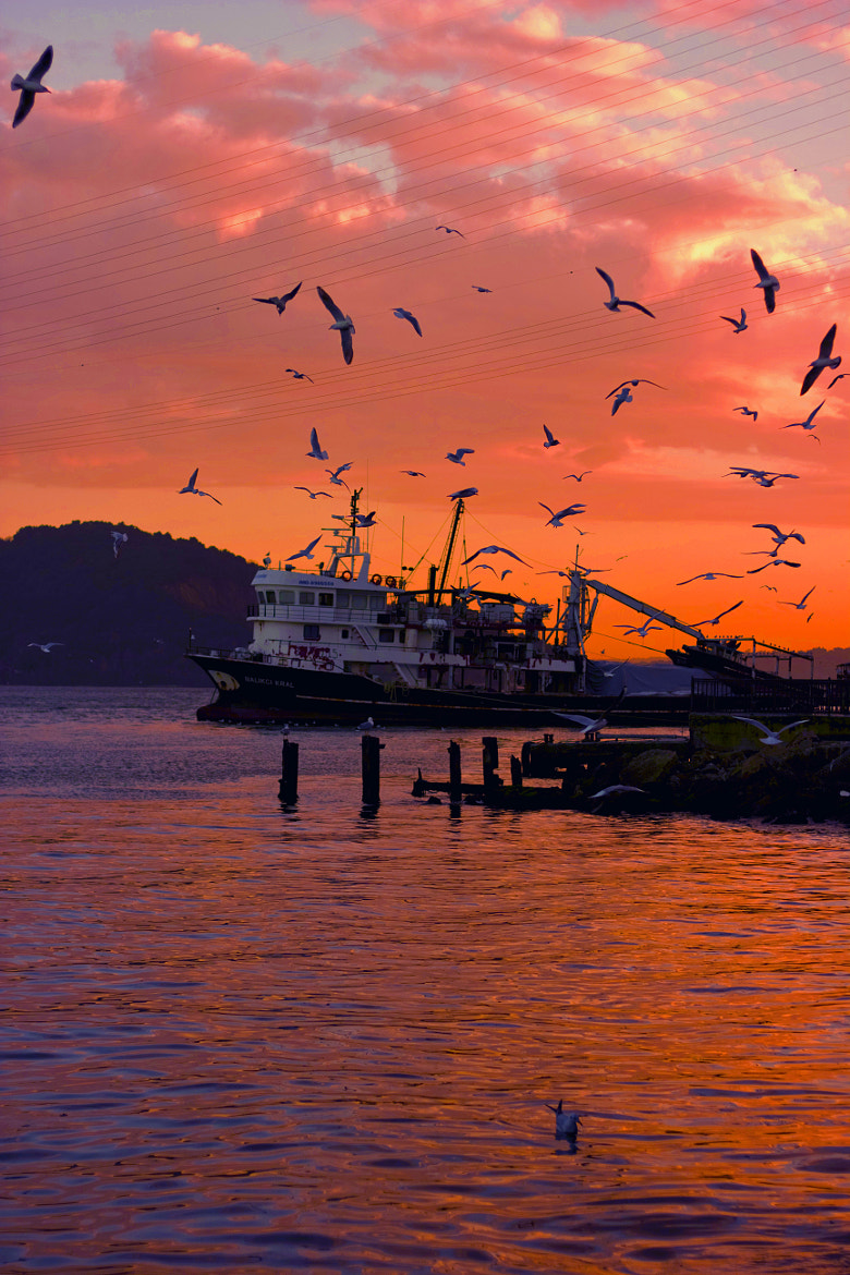 Photograph SUNSET by zen free on 500px