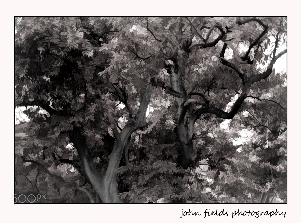 Photograph Trees in gray by John Fields on 500px