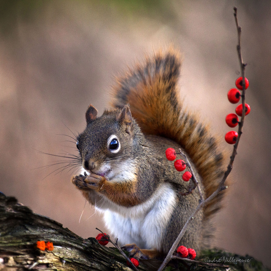 And the winter is coming by Andre Villeneuve
