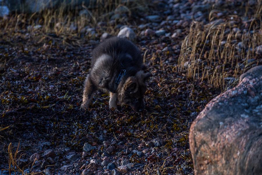 jekkuporkkala by Simo Ikävalko on 500px.com