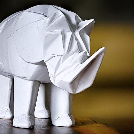 Rhinocéros – Focus Stacking