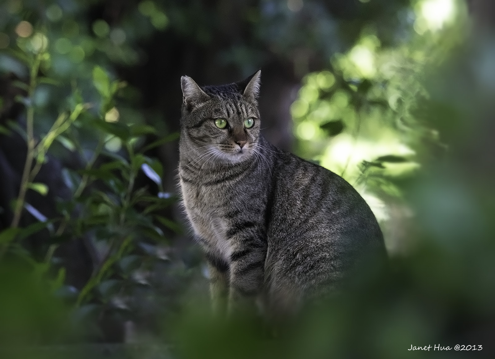 Photograph Farm Cat by Janet Hua on 500px