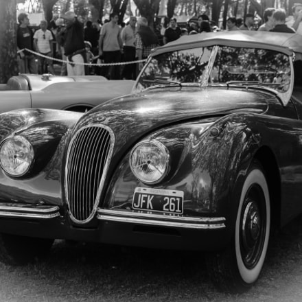 Jaguar 1954