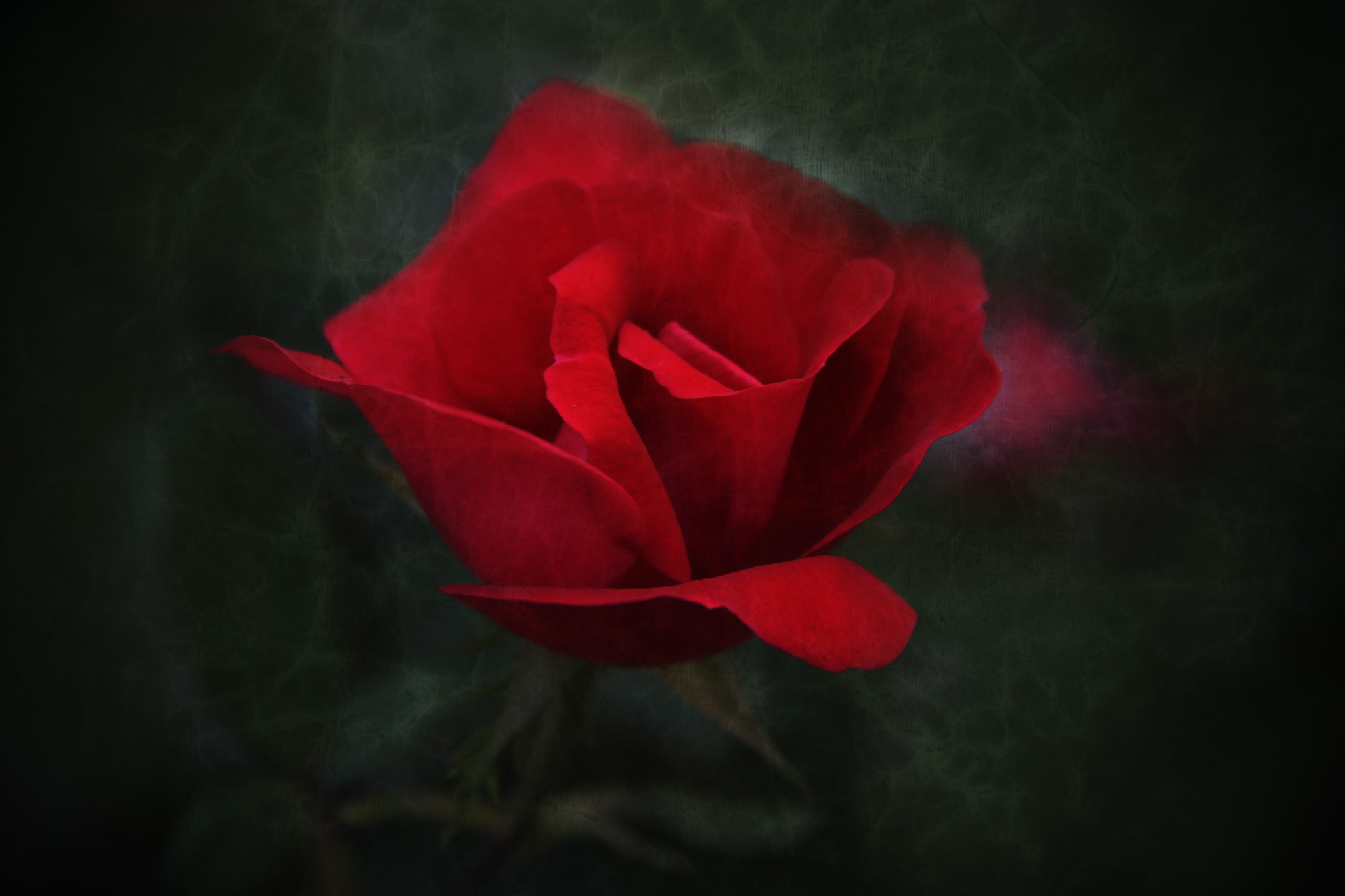 Photograph Drop of Red by Robert Goulet on 500px