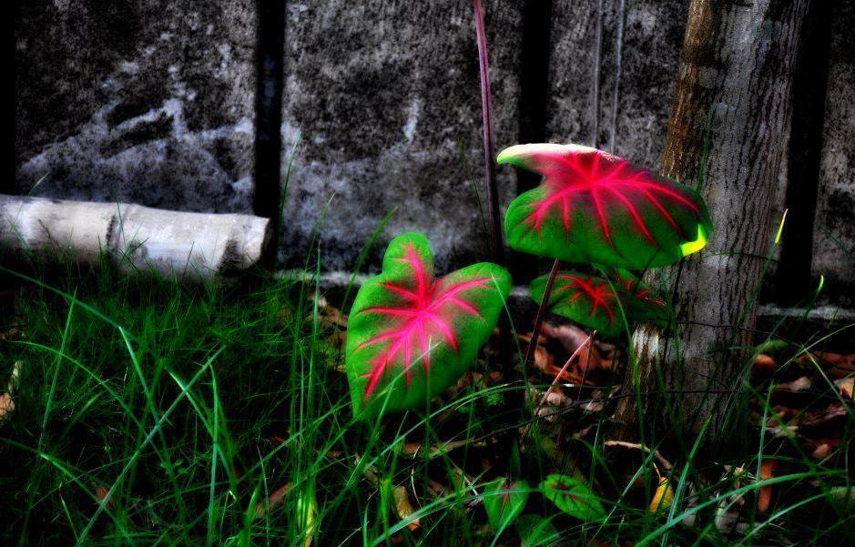 Photograph i glow in pink ! by Ruptrishna Nath on 500px
