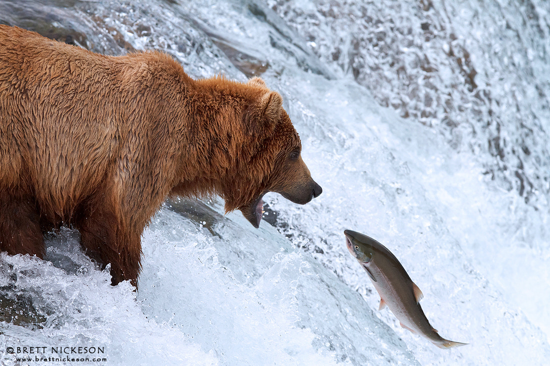 Photograph The Catch by Brett Nickeson on 500px