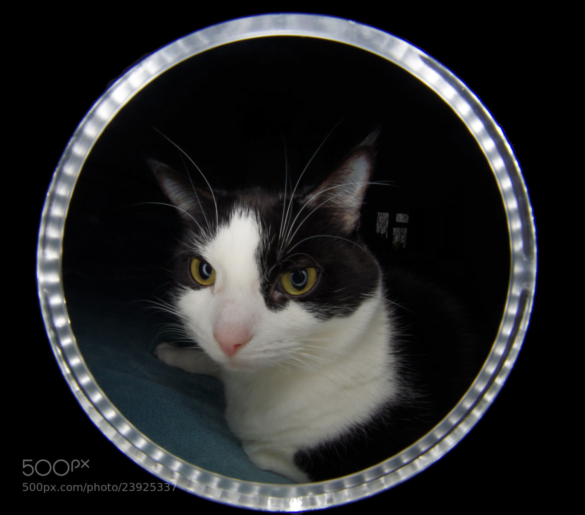 Photograph A Cat Through The  by Lee Ashman on 500px