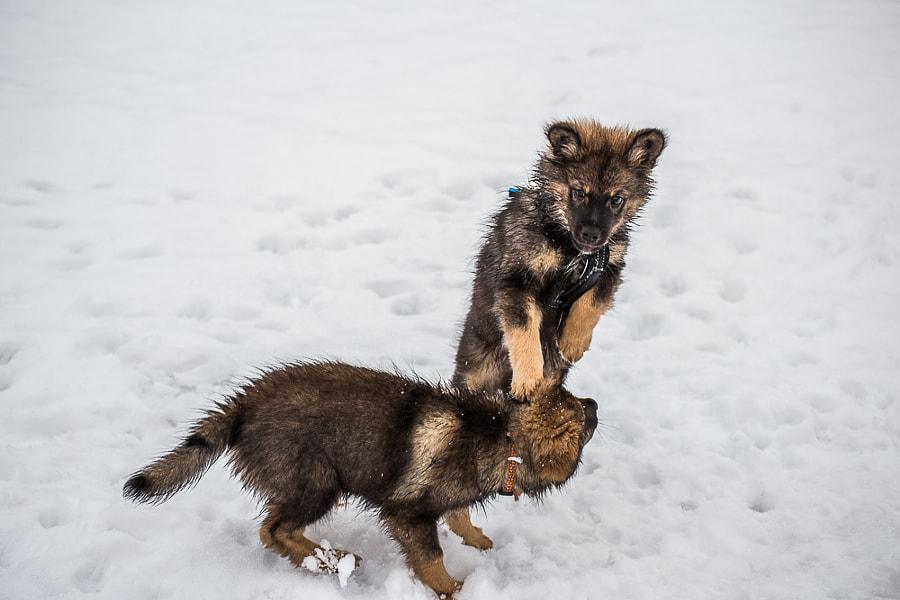 pentutreffit by Simo Ikävalko on 500px.com