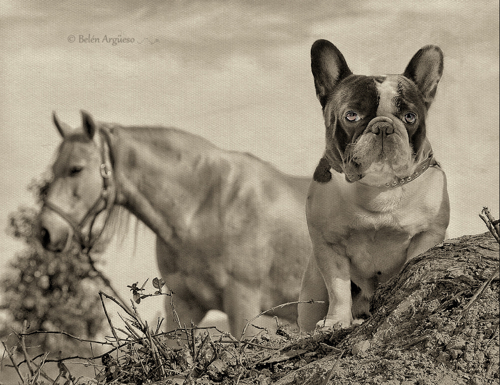 Photograph Thyson in white and black.. by Belén Argüeso Castelos on 500px