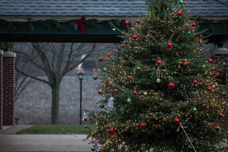Christmas Tree by Mark Becwar on 500px.com