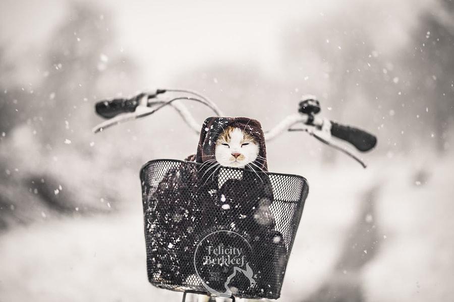 Winter Is Coming by Felicity Berkleef on 500px.com