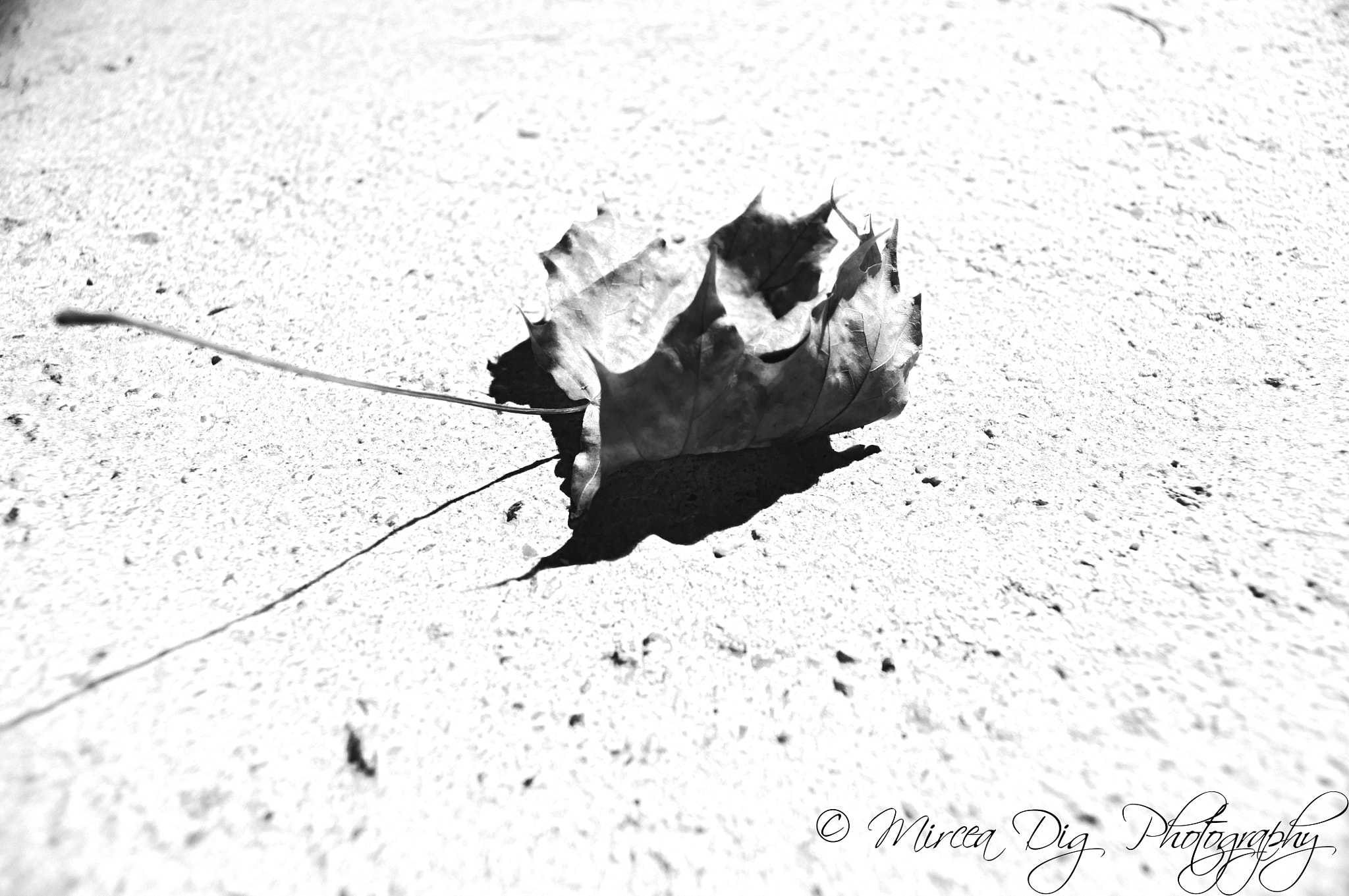 Photograph monocromatic leaf by Mircea Dig on 500px