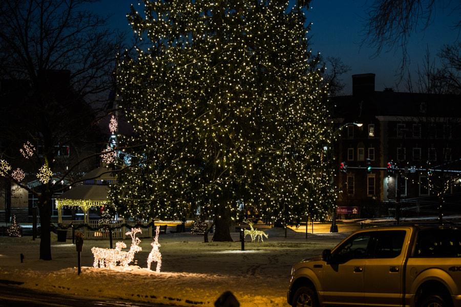 Big Tree by Mark Becwar on 500px.com
