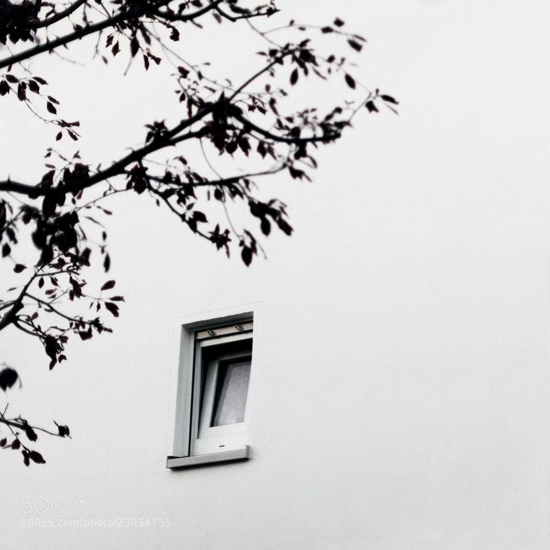 Photograph zwischen den friedhöfen xxxii by Aileen Wessely on 500px
