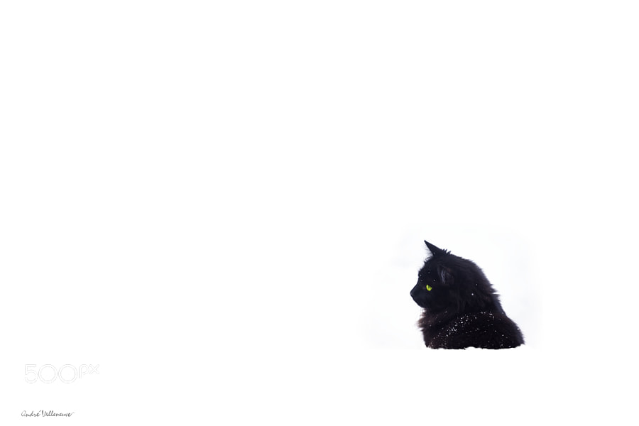 Photograph Chat noir by Andre Villeneuve on 500px