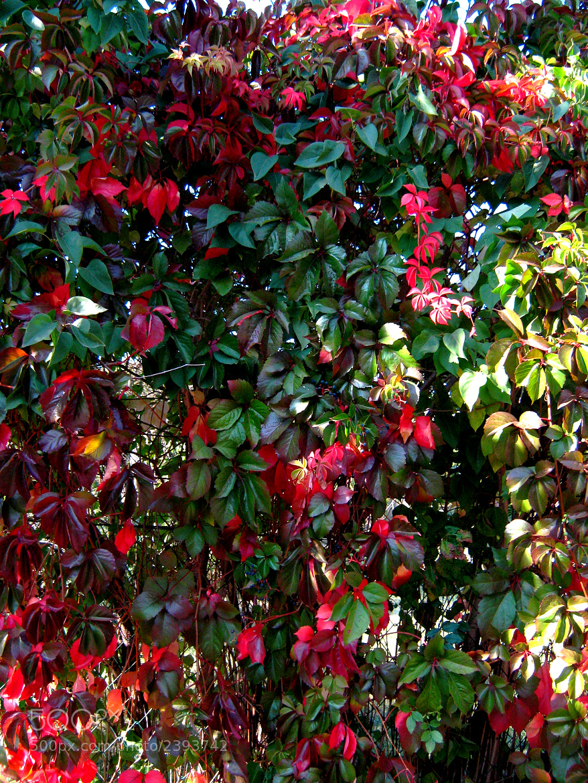 Photograph Autumn colors by ÁngelDeGuardia * on 500px