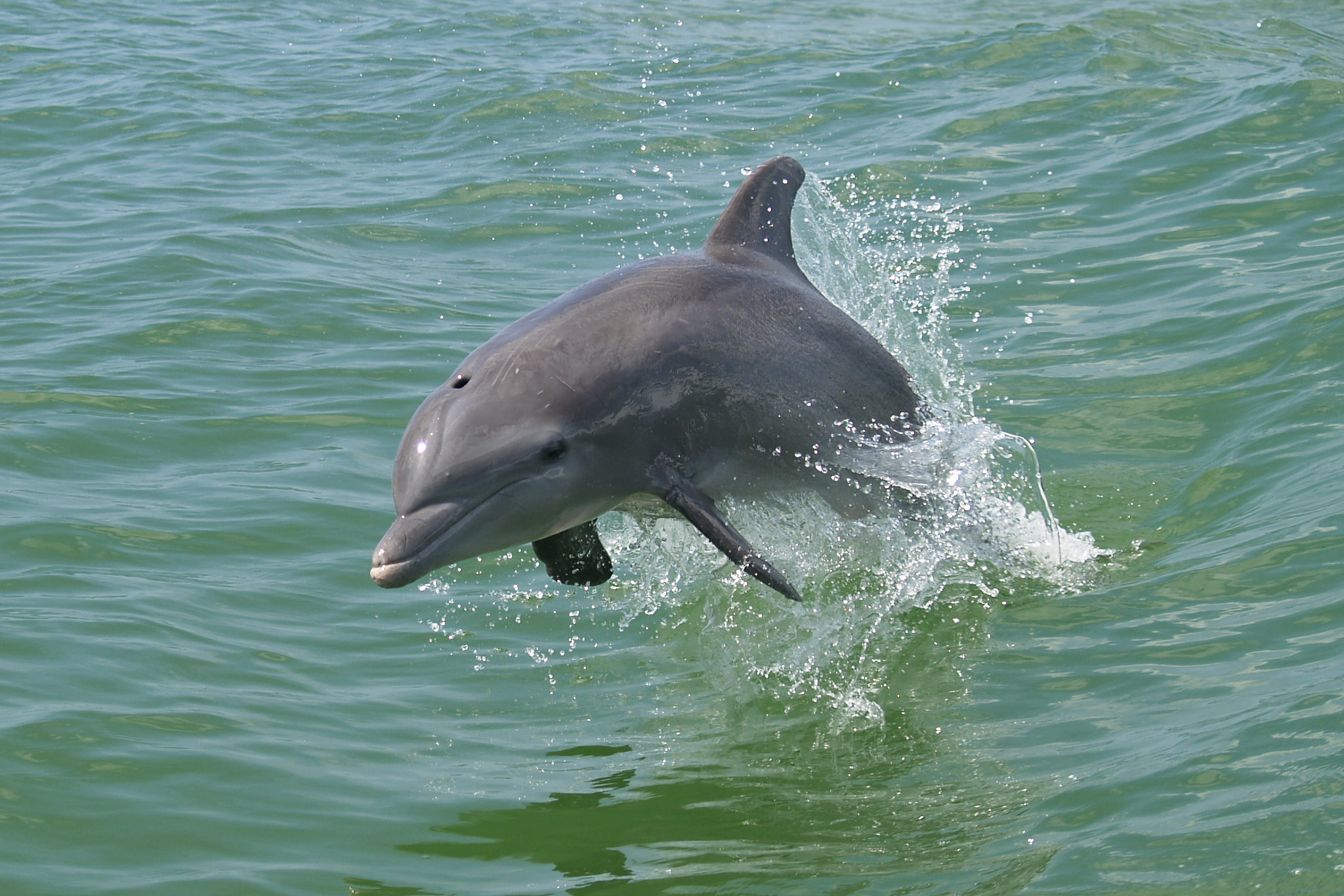 Photograph dolphin by Arjan Quist on 500px