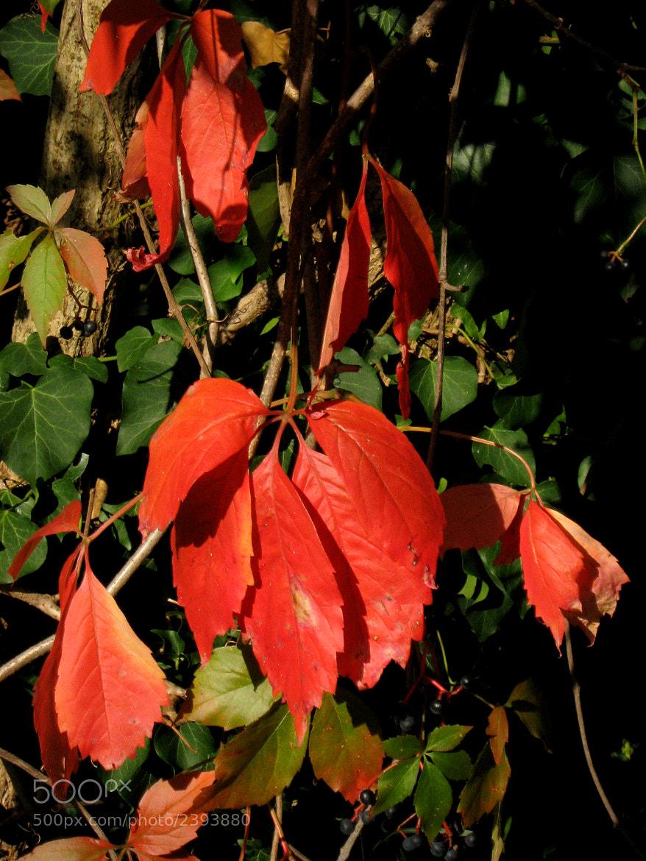 Photograph Autumn colors  2 by ÁngelDeGuardia * on 500px