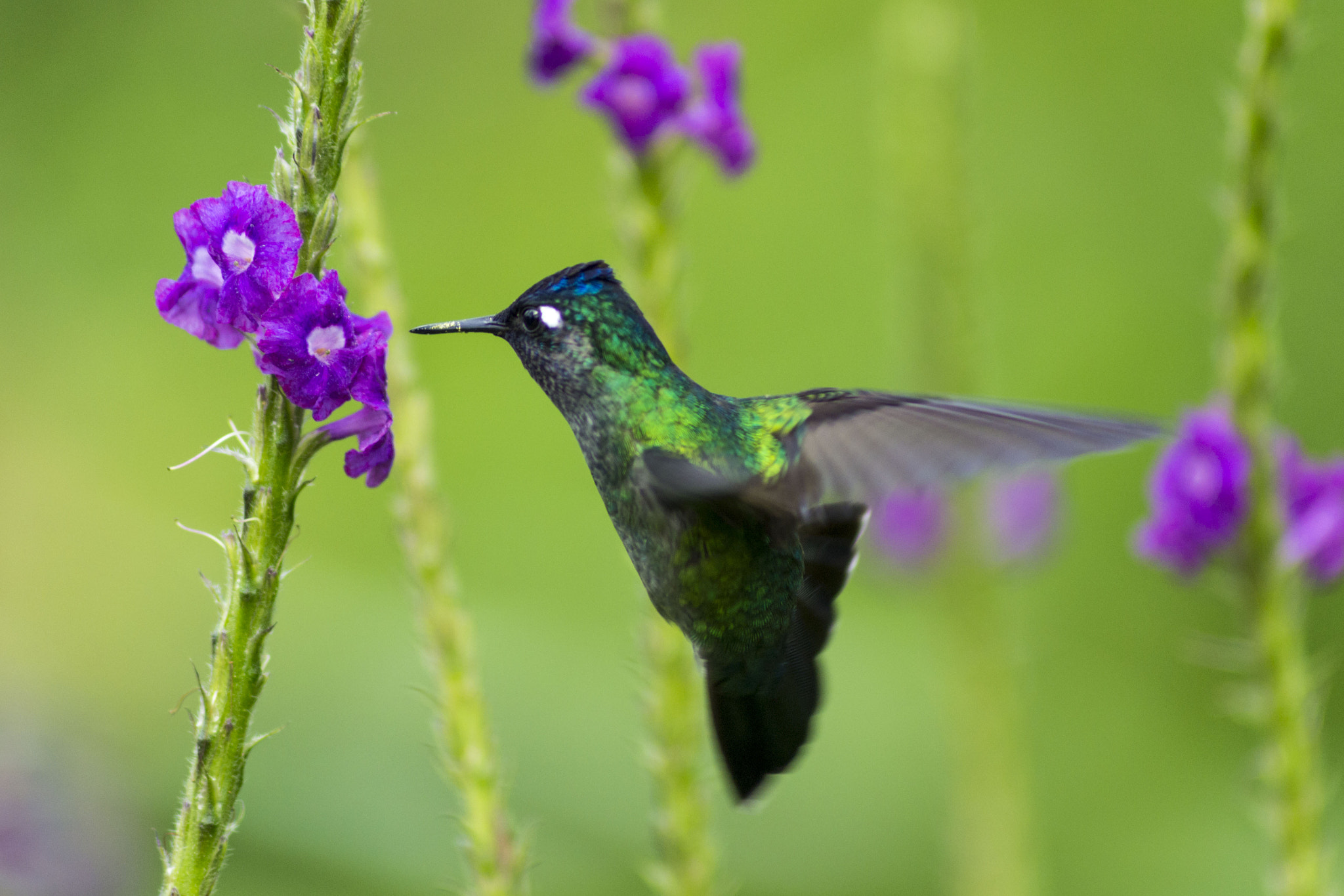 Photograph Colibri by Christophe LB on 500px