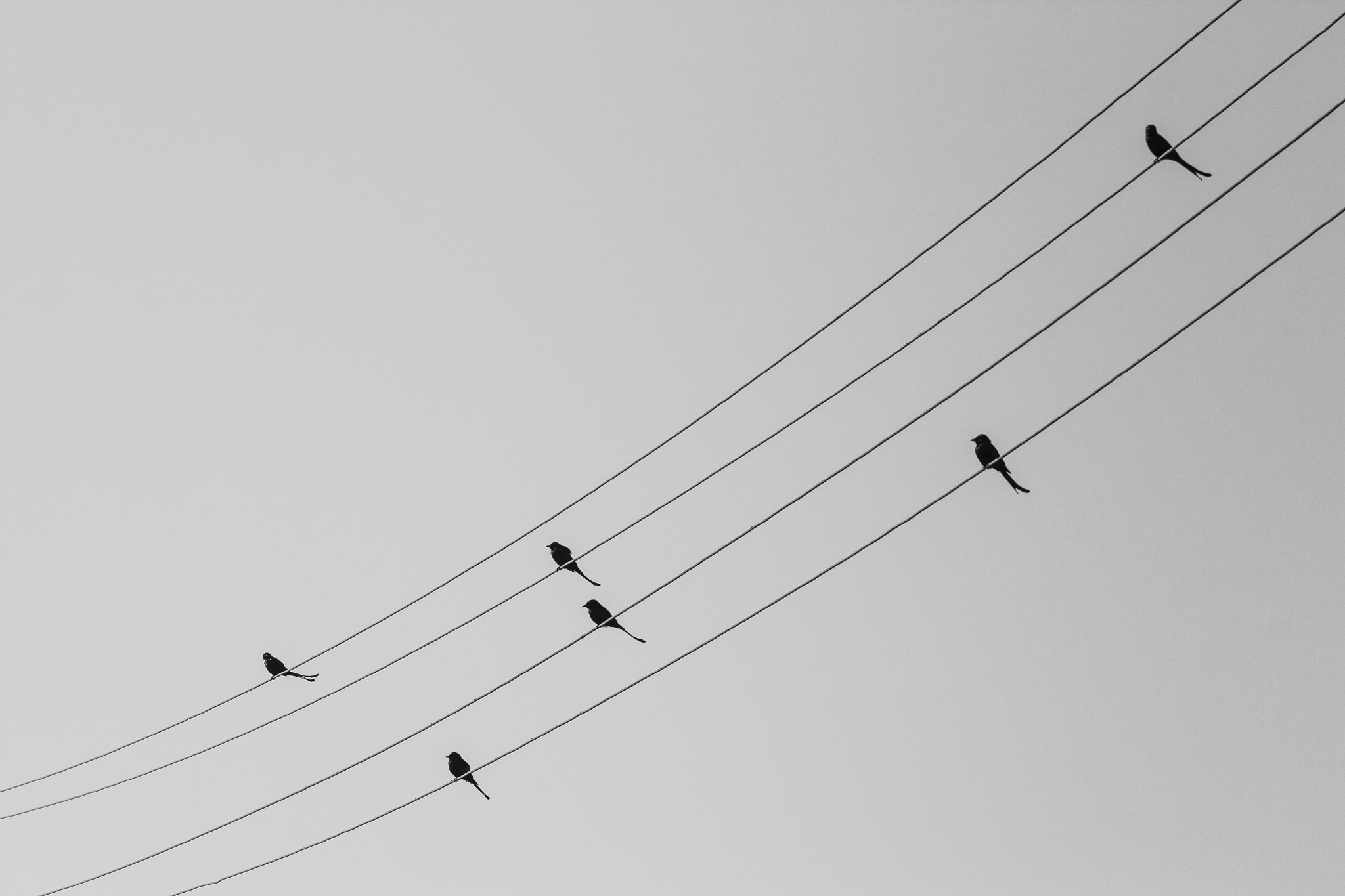 Photograph Musical Notes by Gunjan  Puri on 500px