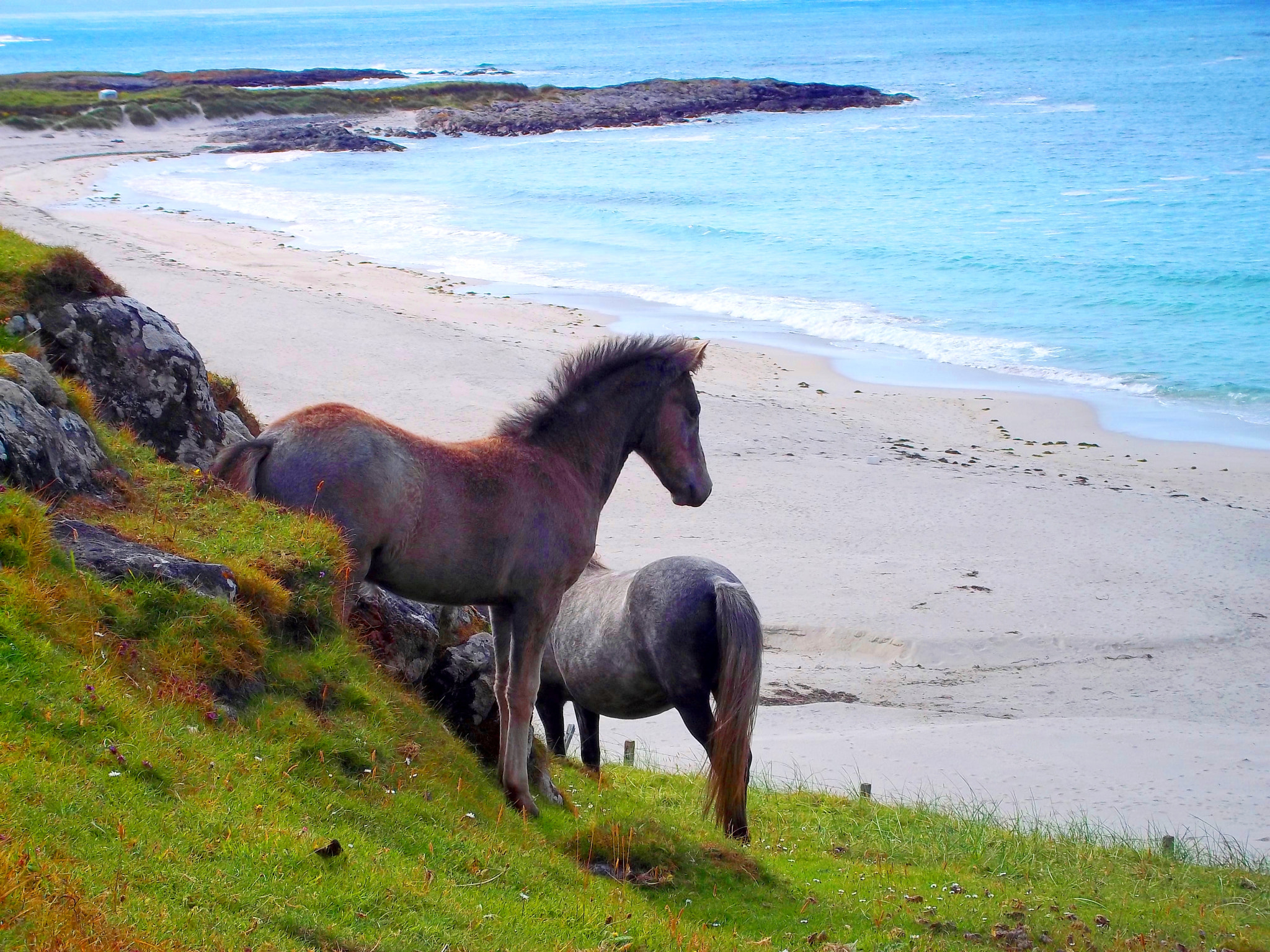 Photograph Eriskay Ponies by Jemma Brannigan on 500px