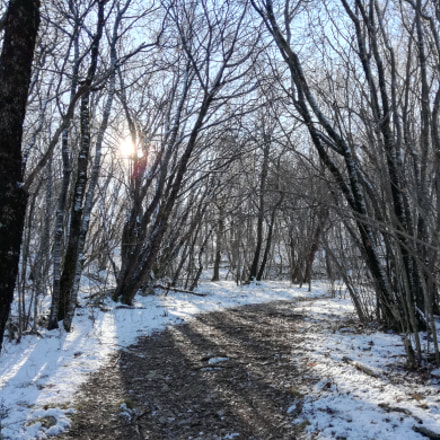 Wintertime forest