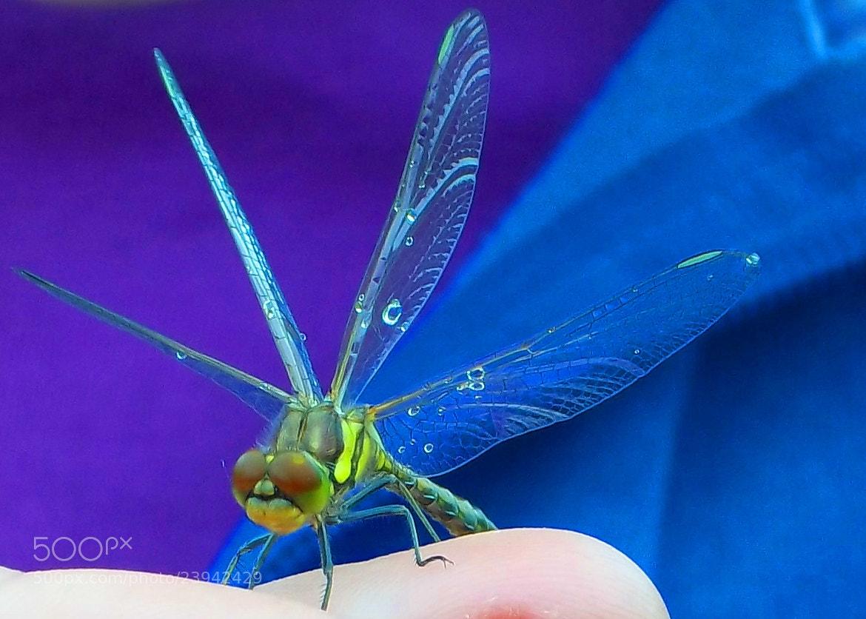 Photograph Dragonfly Days by Jemma Brannigan on 500px