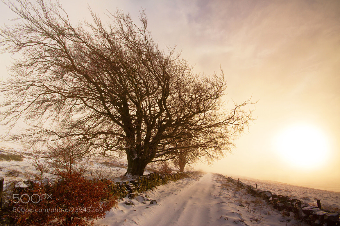 Photograph Diffused Light by Simon Cameron on 500px
