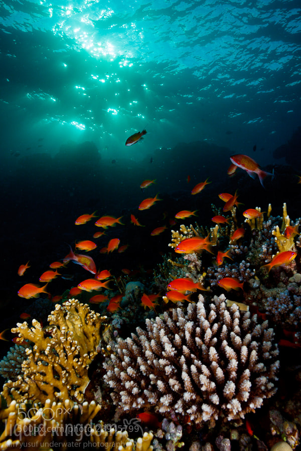 Photograph Red Sea IV by Kim Yusuf on 500px