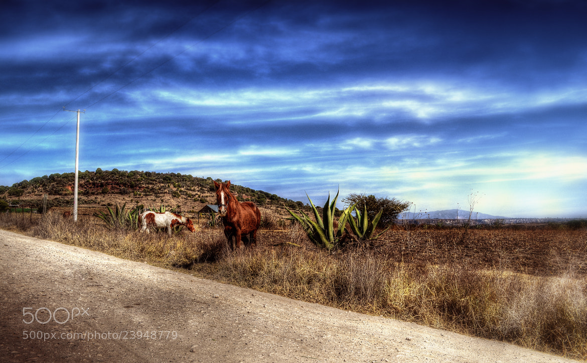 Photograph Mexican Cliché by Erick Garcia Garcia on 500px