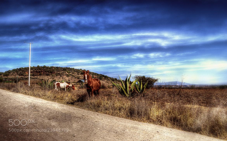 Photograph Mexican Cliché by Erick Garcia Garcia on 500px