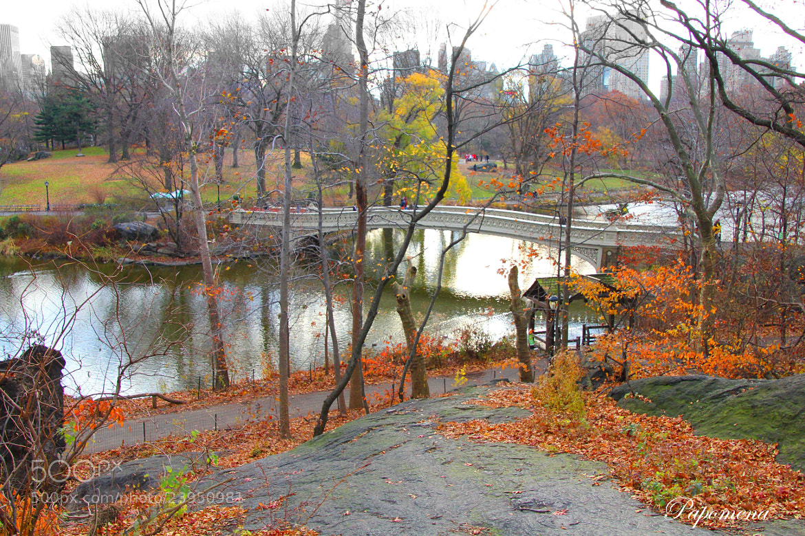 Photograph Autumn in Central Park 2012 by Papo Mena on 500px