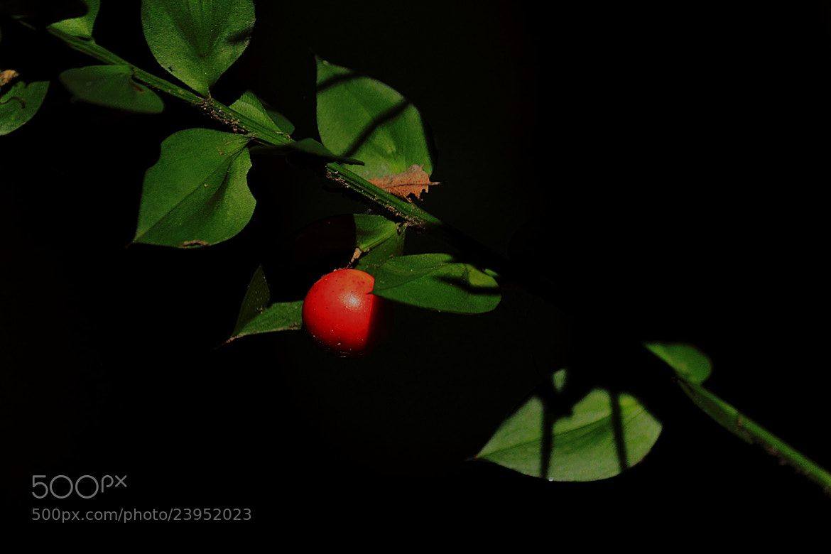 Photograph Red Pearl. by Miguel Silva on 500px
