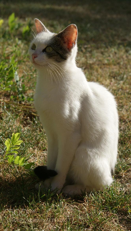 Photograph My cat, Bella.  by Barbora Remenarova on 500px