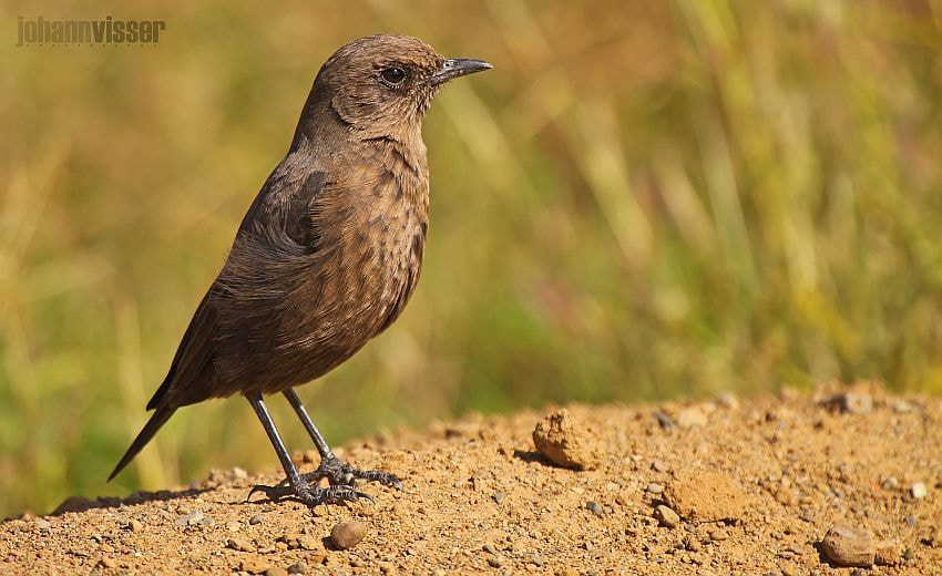 Photograph ANTEATING CHAT by Johann Visser on 500px