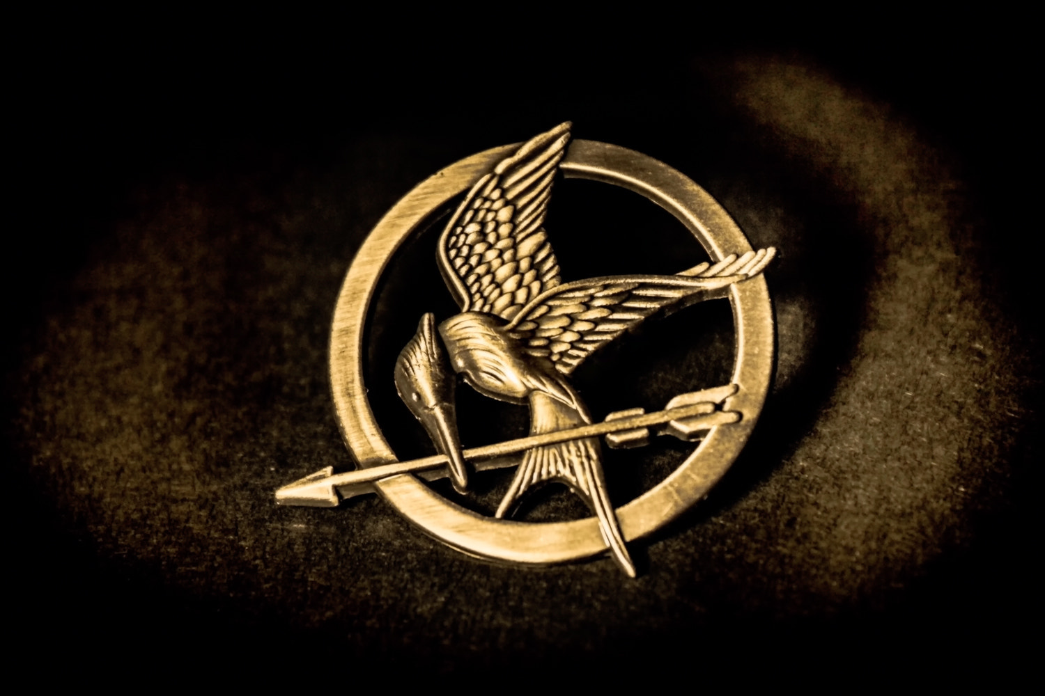 Photograph mockingjay by Kazımcan Malkoç on 500px