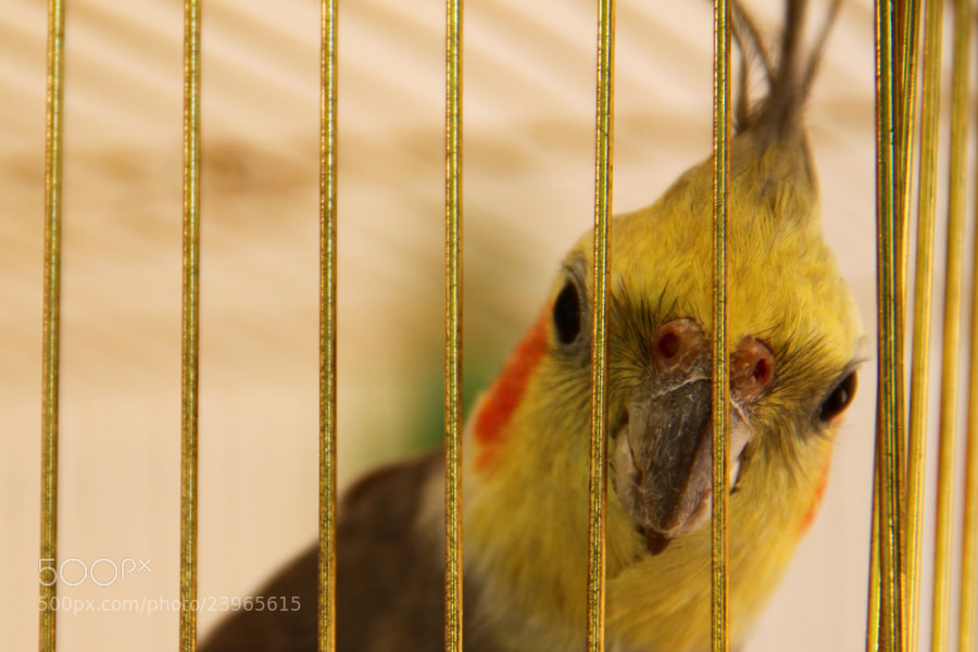 Photograph Bird in a Cage by Mehmet Gurel on 500px
