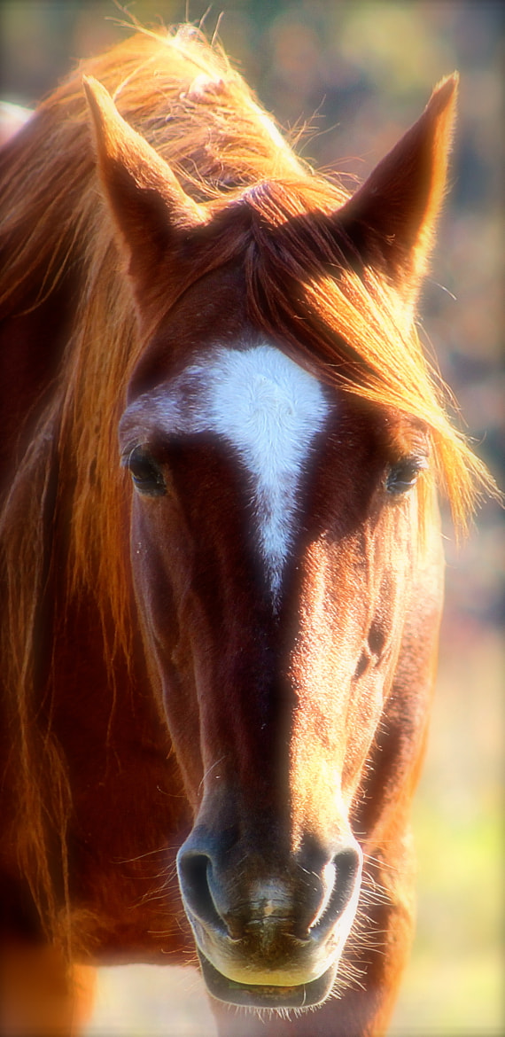 Photograph Beautiful Face by Ann Weis on 500px