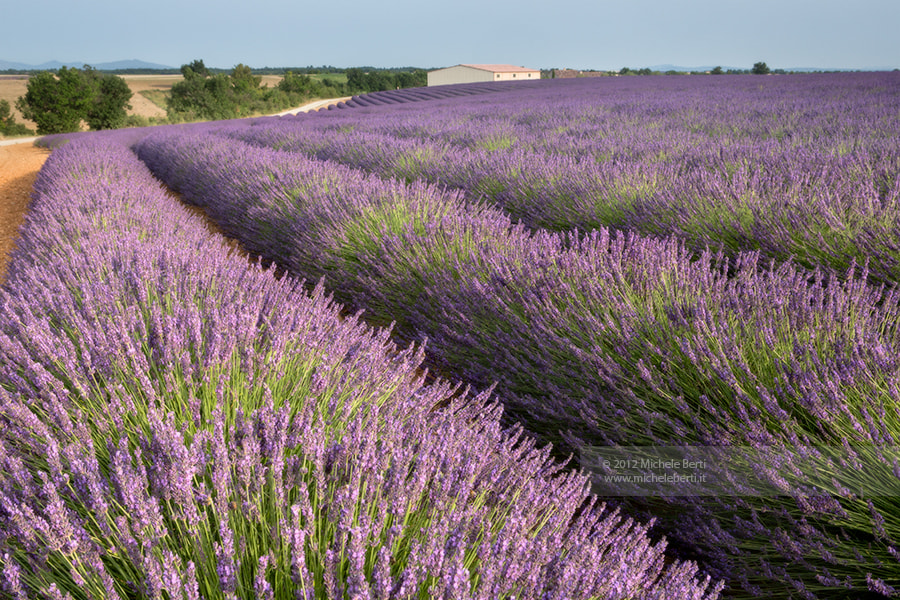 Photograph Little farm in lavender's field (Jun 2012) by michele berti on 500px