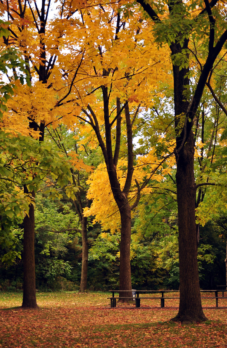 Photograph High Park  by Djordje Stankovic on 500px