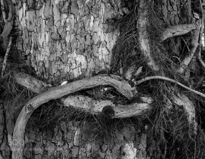 Photograph Nature's battleground by Cody Marshall on 500px