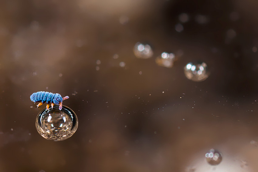 Photograph Collembola on bubble by Philippe Lebeaux on 500px
