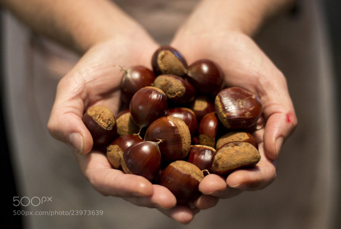 Photograph chestnuts by Isadora Cazella on 500px