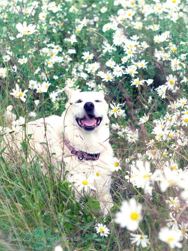 Photograph Suki, Flowers by Denise Lingerfelt on 500px