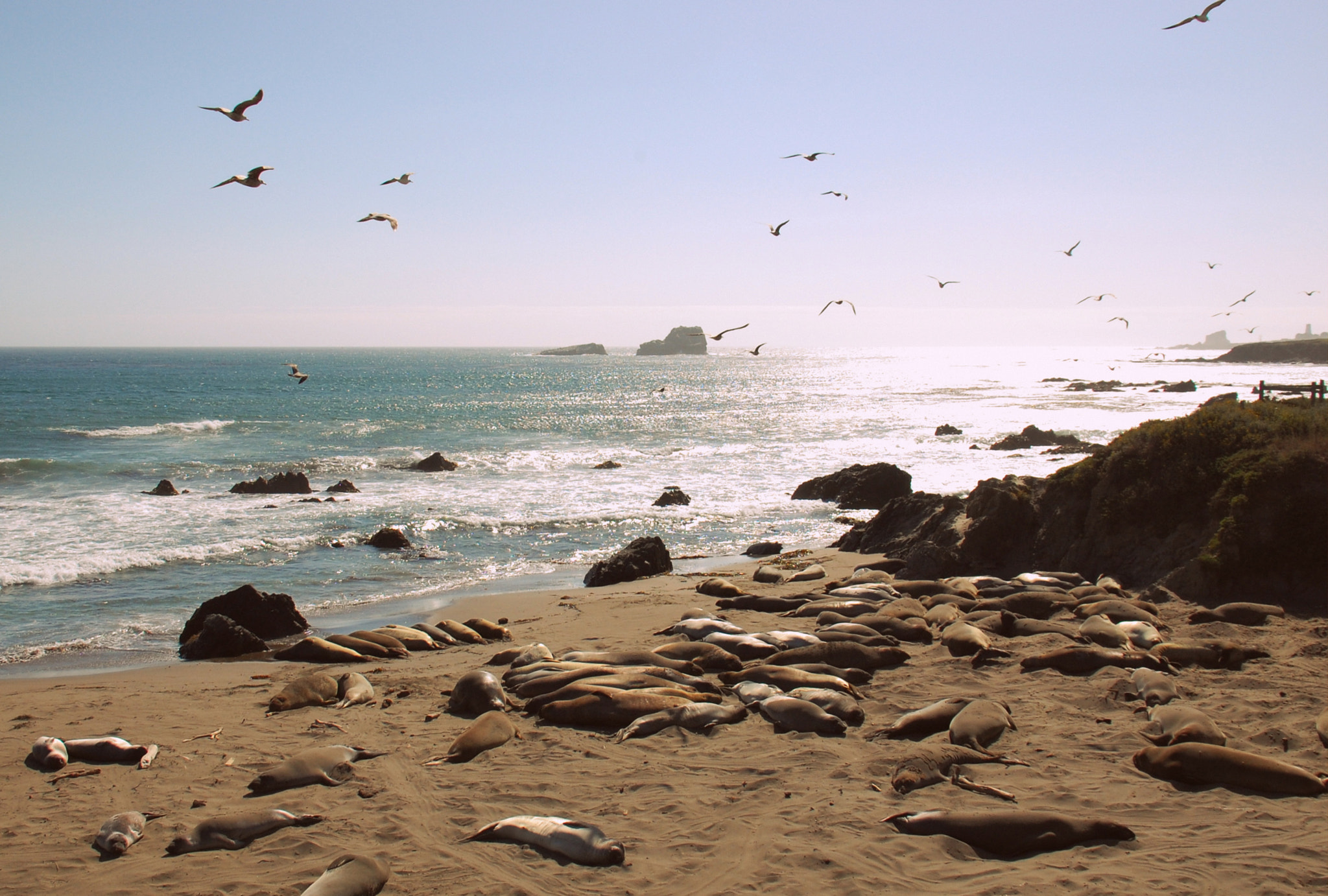 Photograph Elephant Seals Sunning by Sarah Kate Wong on 500px