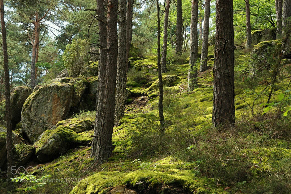 Photograph Somewhere in the forest by Emmanuel Boutin on 500px