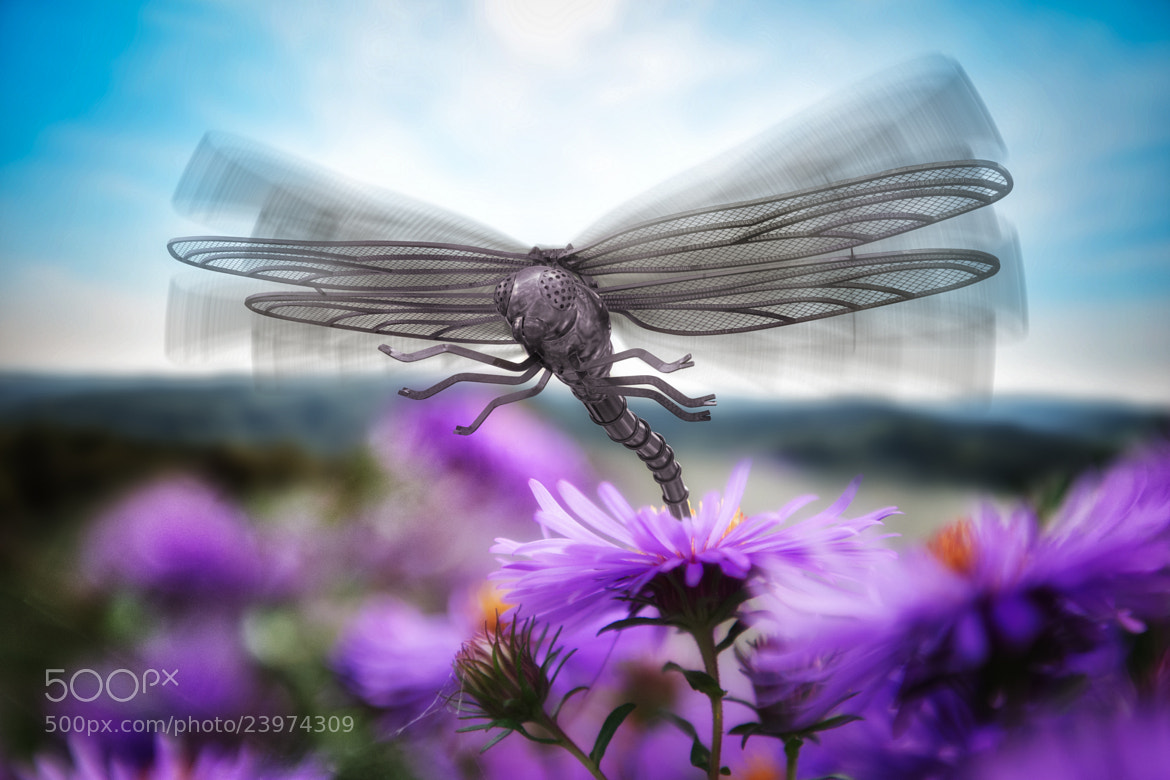 Photograph The Dragonfly Knight by John Wilhelm is a photoholic on 500px