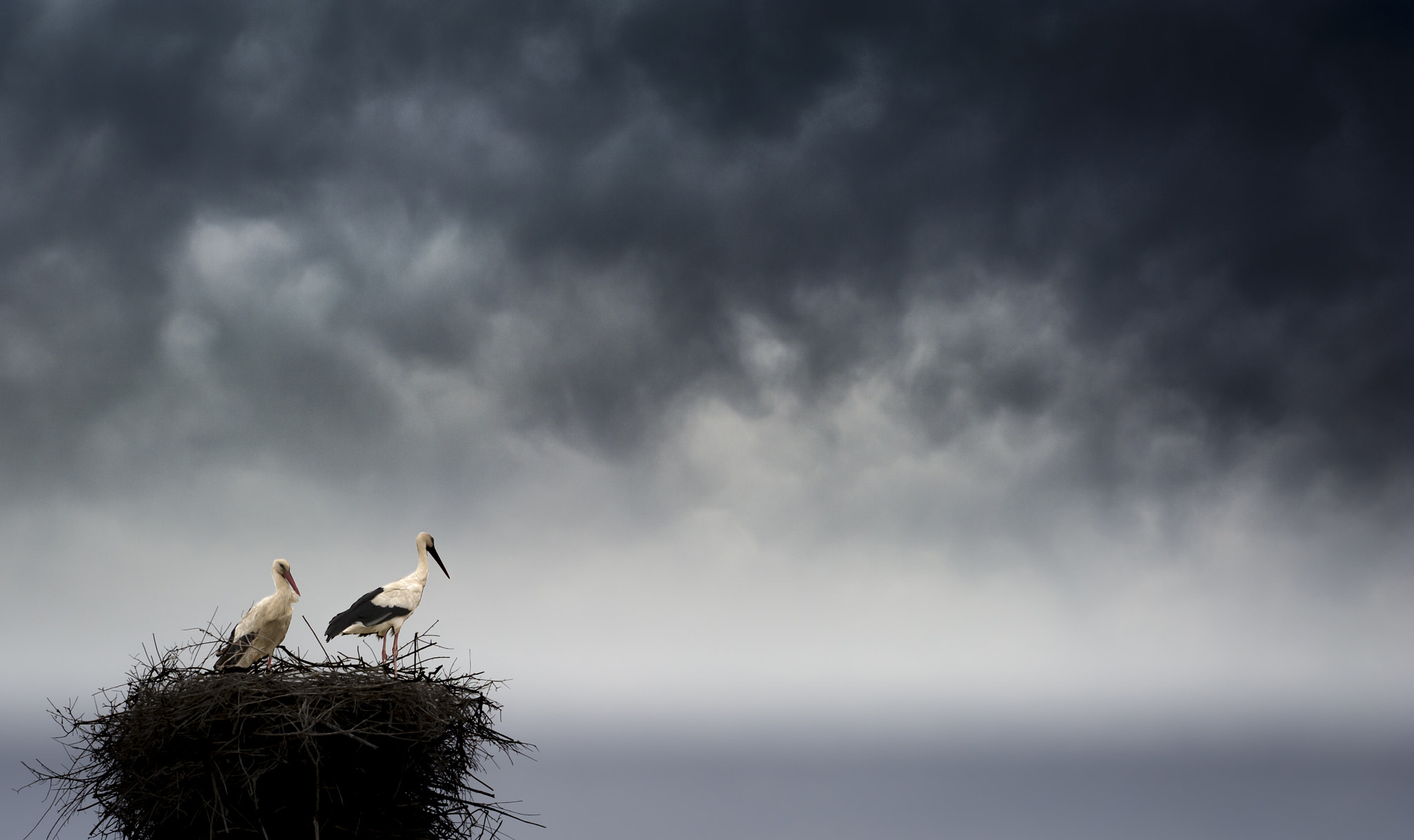 Photograph Storks by Hani Latif Zaloum on 500px