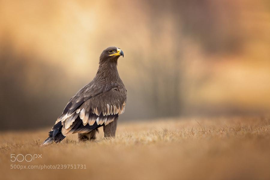zahoorsalmi-salmi-nature-natural-canon-birds-watch-animals