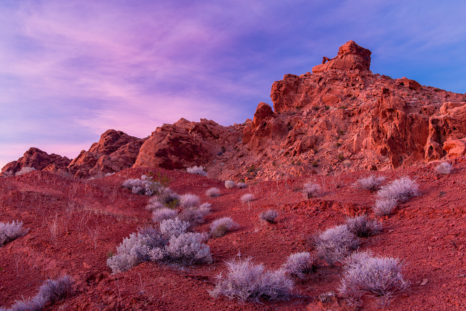 Photograph Silver Sage in the Valley of Fire by Russ Colletta on 500px